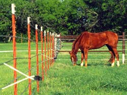 gallagher electric horse fence